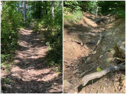 """""""Wald leidet massiv"""" in Region Daaden-Herdorf wegen Motocrossfahrern und Mountainbikern<br />"""