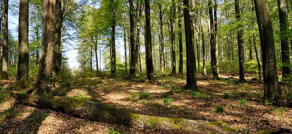 """""""Wald vor Basalt!"""": Naturwaldreservat Nauberg erhalten"""