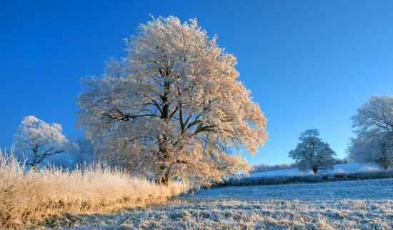 Eisiger Winter im Anmarsch: Zweistellige Minusgrade möglich