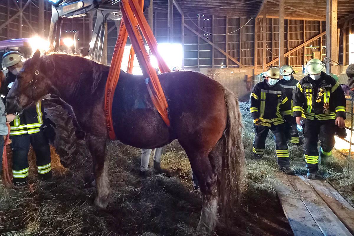 Feuerwehr Kurtscheid rettet Pferd aus Notlage