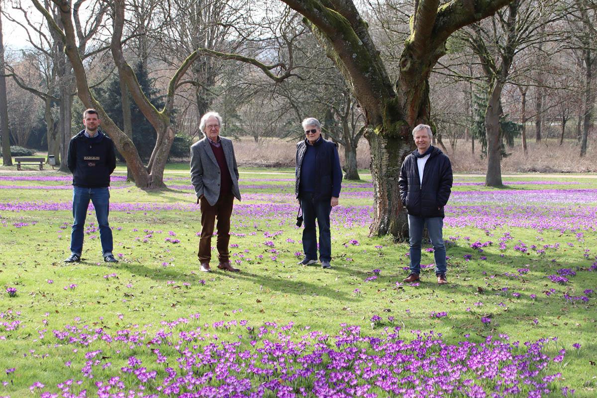Krokusblüte in Bad Honnef - Unterstützung erwünscht