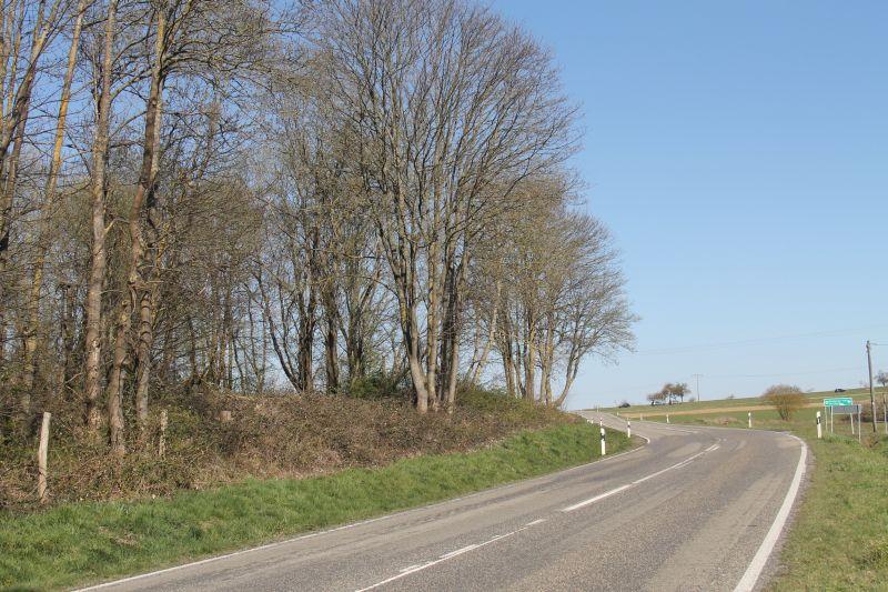 Baumfällarbeiten zwischen Himmelfeld und L318