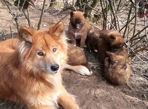Wolfswinkeler Hundetage: Kooperation und Intelligenz von Hunden sind Thema