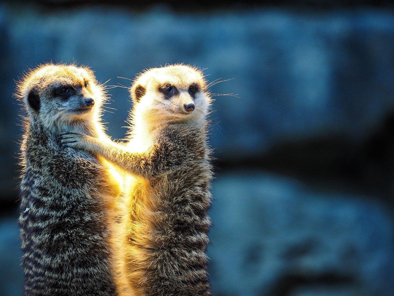 Öffnung von Zoos kann bestehen bleiben