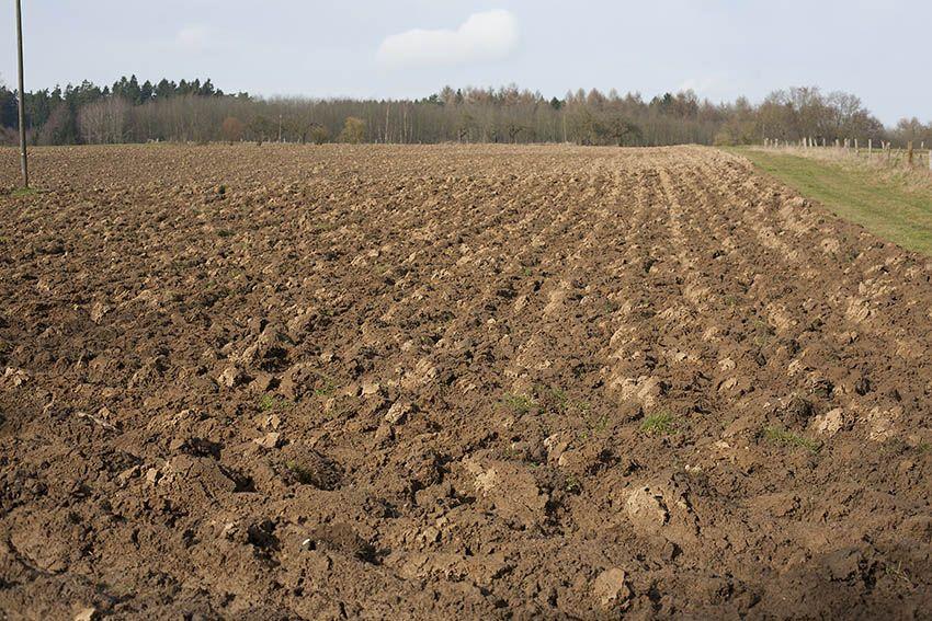 Agrarpaket: Zukunft ohne Bauern? - Auf zur Demonstration nach Bonn