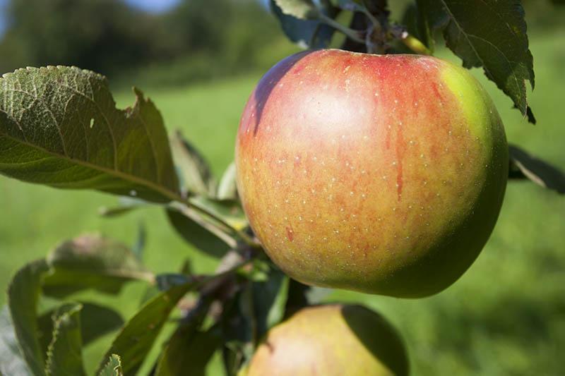 Mobile Apfelpresse in Urbach - Interessenten bitte anmelden