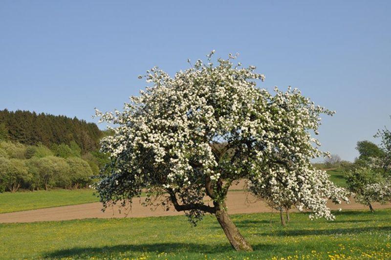 Obstbaumschnittkurs in Theorie und Praxis in Westerburg