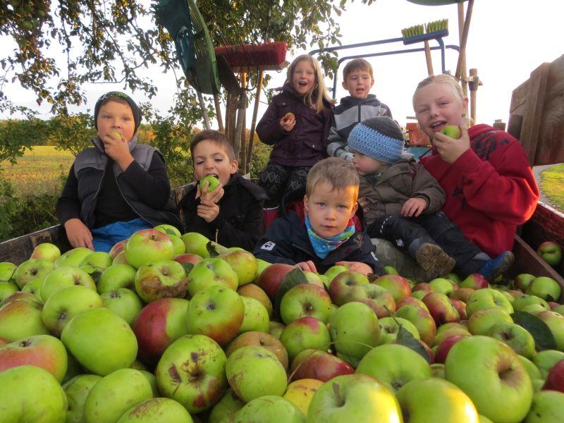 Macht sichtlich Spaß: Äpfel ernten und selbst verarbeiten statt verfaulen lassen. Foto: Verein
