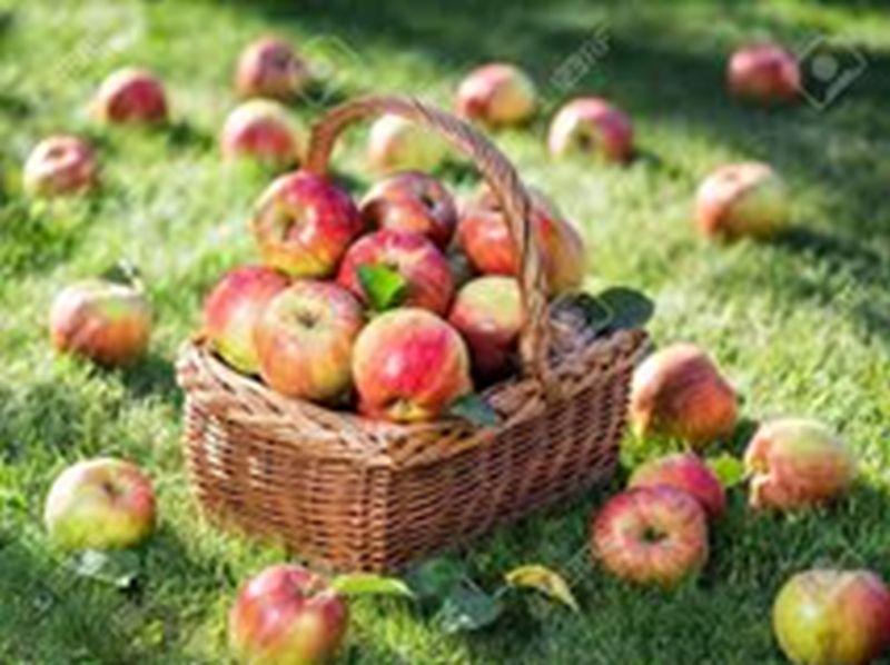 AG Naturschutz Dürrholz: Alljährliches Apfelfest für Kinder
