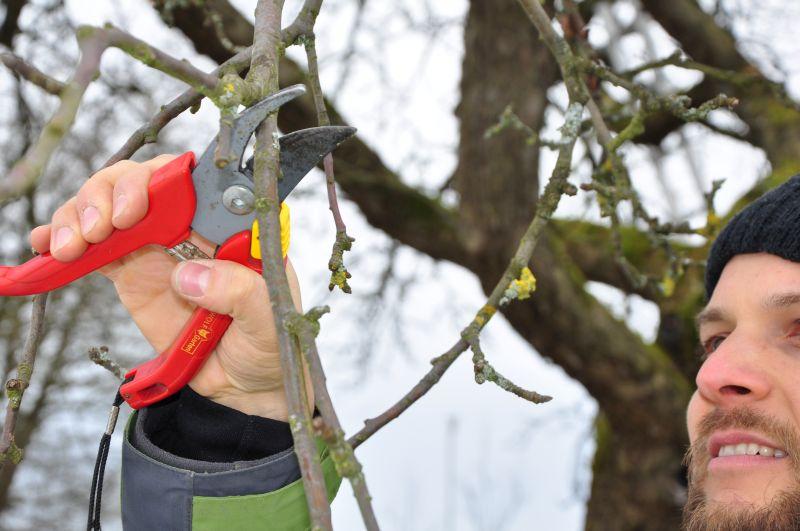 Obstbaumschnittkurse in Theorie und Praxis