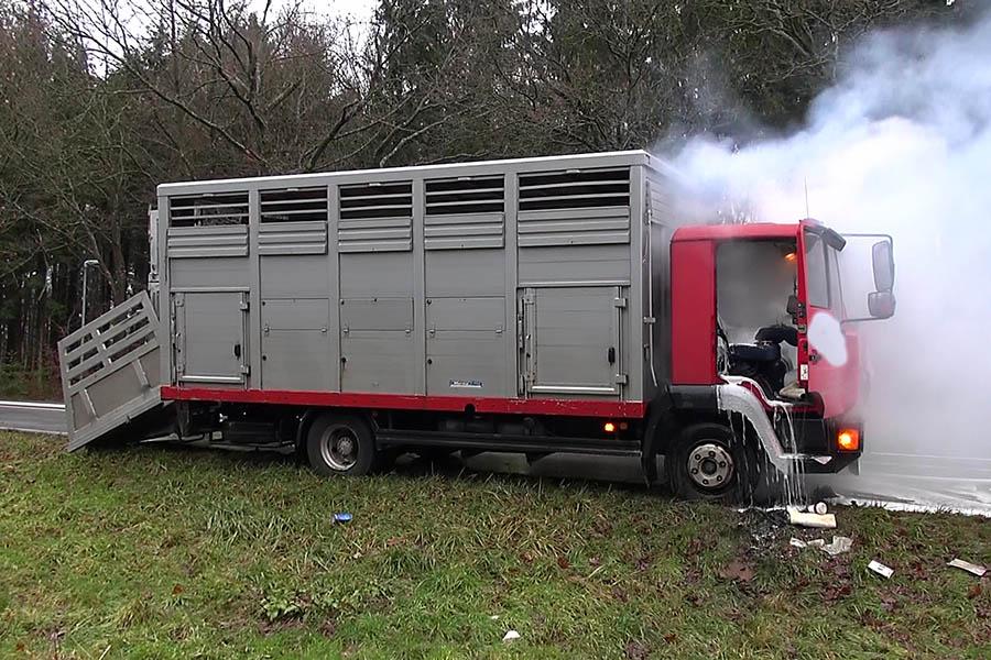 Fünf Kälber aus brennendem Viehtransporter auf B 8 gerettet