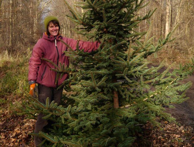 Ökologisch und fair produzierte Weihnachtsbäume kaufen