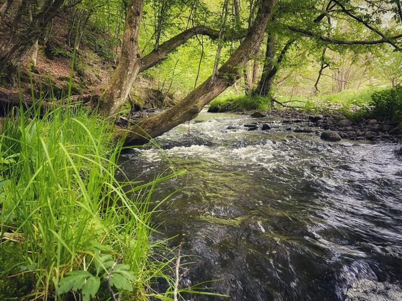Limbacher Bachlehrpfad entlang der Kleinen Nister. Quelle: Björn Schumacher