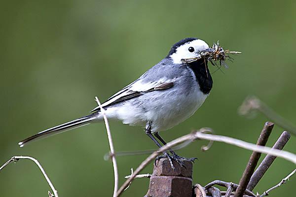 NABU ruft zur Vogelzählung auf