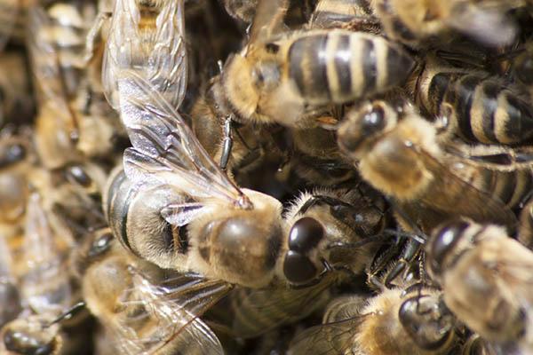 Imkerverein Anhausen: Vernetzen Sie sich wie die Bienen