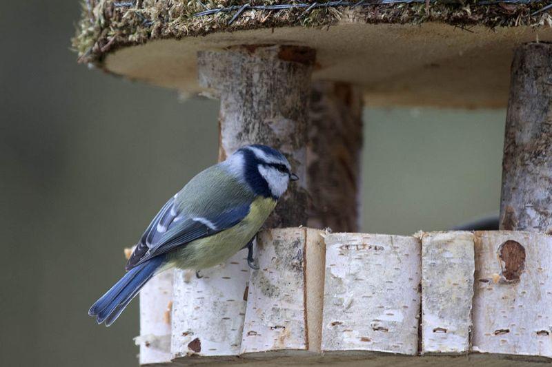 NABU: Vögel füttern nicht nur im Winter