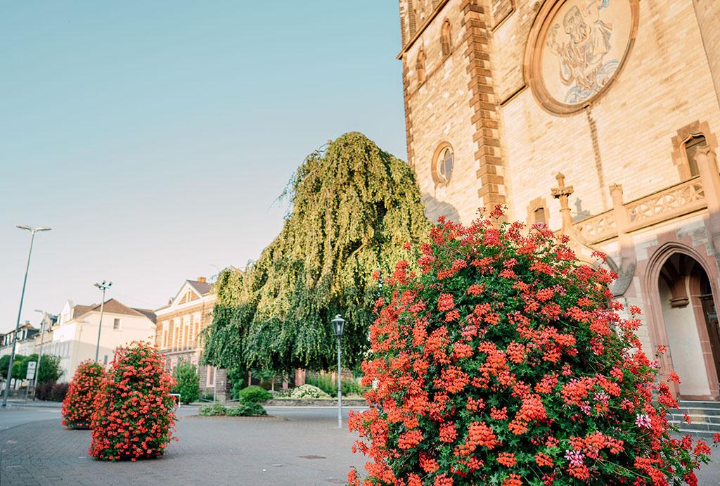 Blumenpracht verschönert Innenstadt und gefällt den Bienen