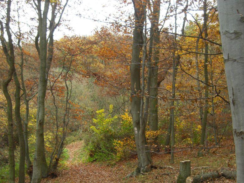 Im Herbstwald mit dem NABU Rennerod