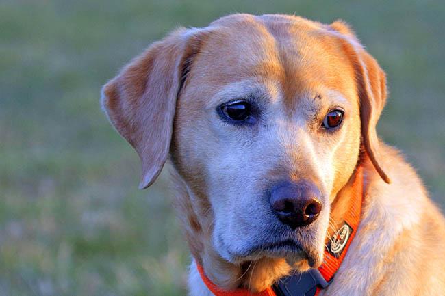 Hund angefahren und abgehauen – Zeugen gesucht