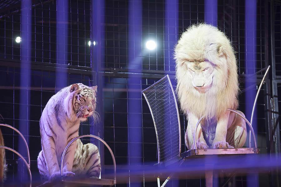 Die Raubkatzen wurden mit Hand aufgezogen. Fotos: Helmi Tischler-Venter und Wolfgang Tischler