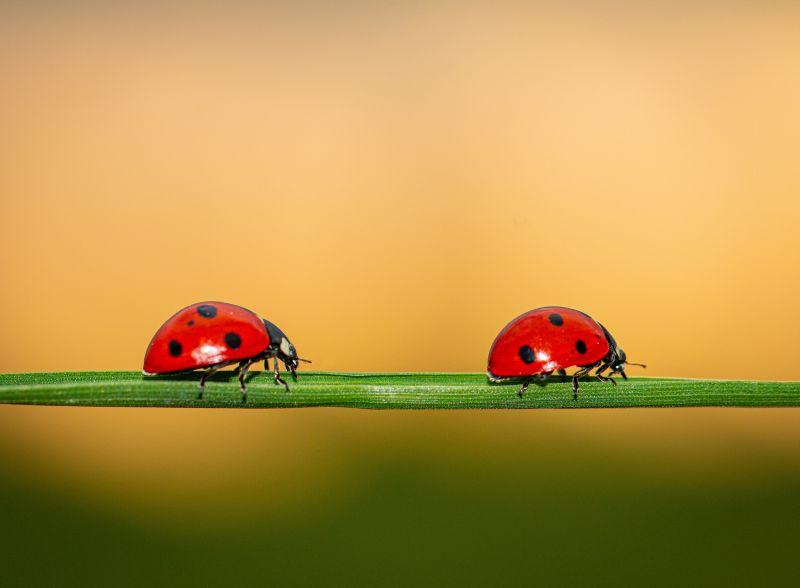 NABU: Insektensommer geht in die zweite Runde