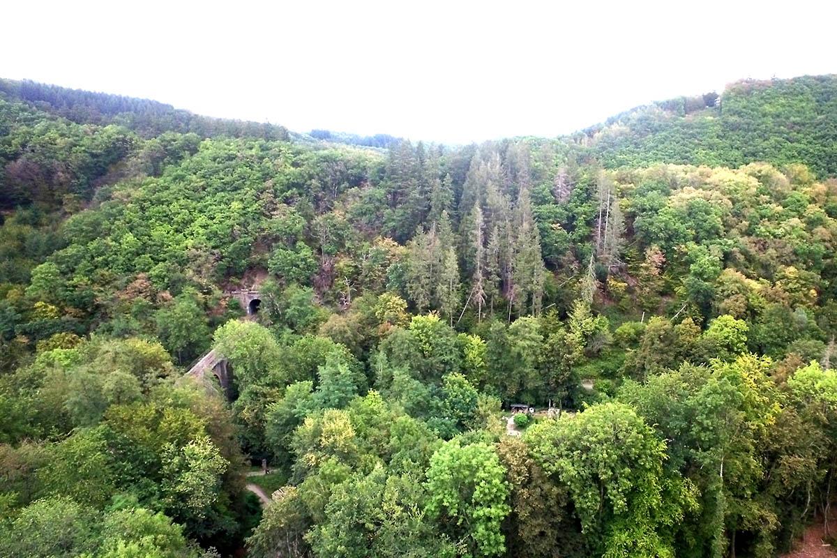 Der Bendorfer Wald wird nachweislich vorbildlich bewirtschaftet. Foto: Stadt Bendorf