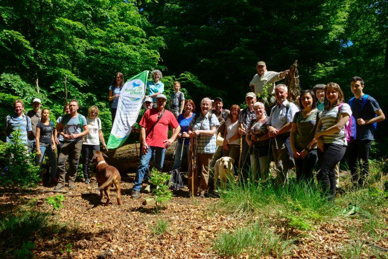 Naturerbe Buchenwälder – Bingelkraut und alte Bäume