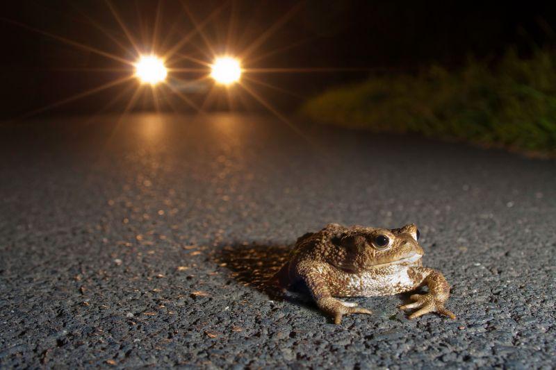 Amphibien schützen