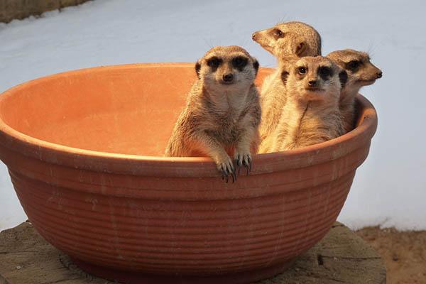 Adventswochenenden im Zoo Neuwied: Türchen öffnen sich