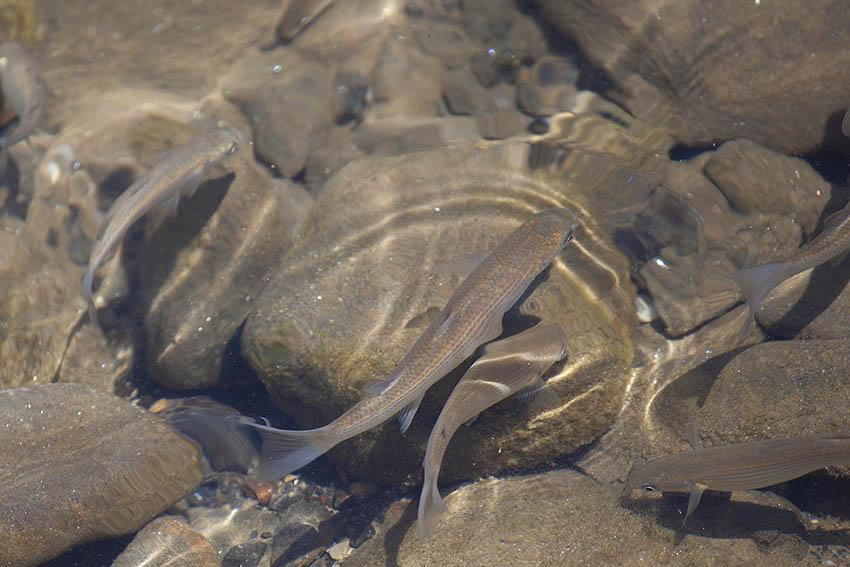 Vorbereitungslehrgang zur staatlichen Fischereiprüfung