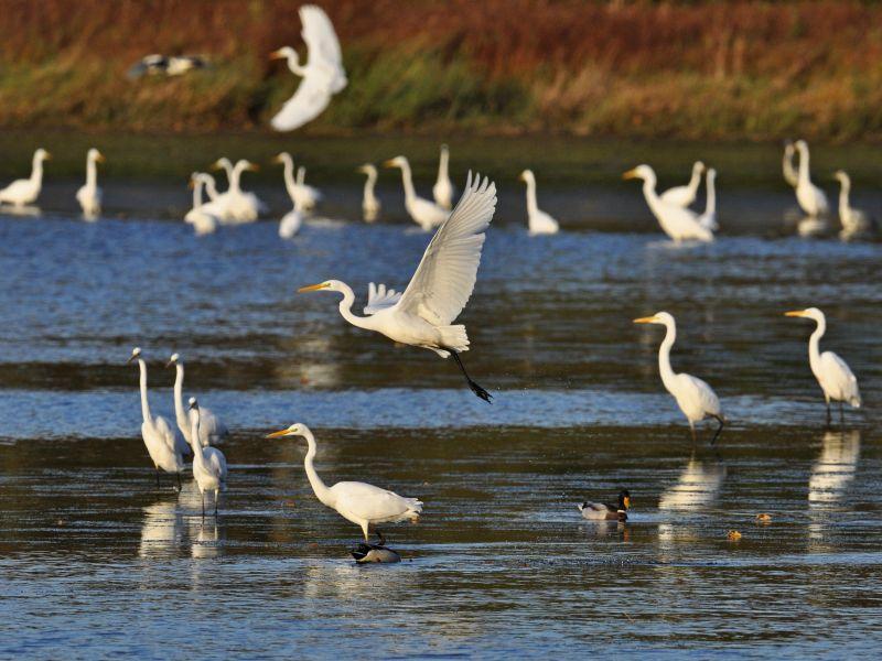 Vortrag über Auf und Ab der Westerwälder Vogelwelt