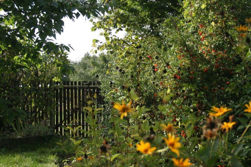 Naturschutz im Garten: NABU gibt Tipps für die Gartensaison