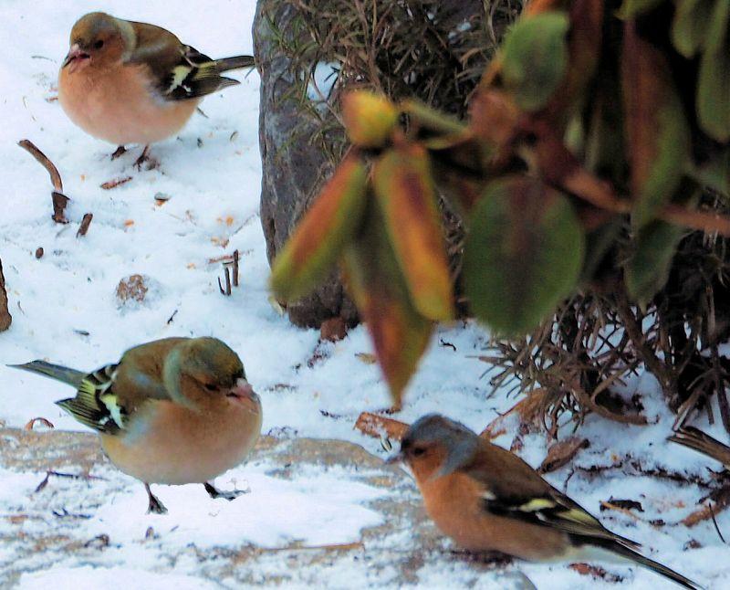 BUND Gartentipp Januar: Zeit f�r Ruhe und Naturbeobachtungen