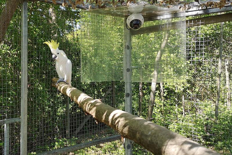 Mehr als 1.000 Studien in Zoos: Neuwied ist auch dabei