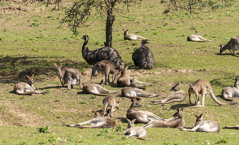 Auf Safari im Zoo Neuwied