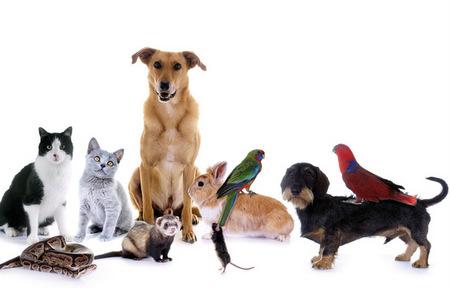 Umweltministerium schreibt Tierschutzpreis 2018 aus