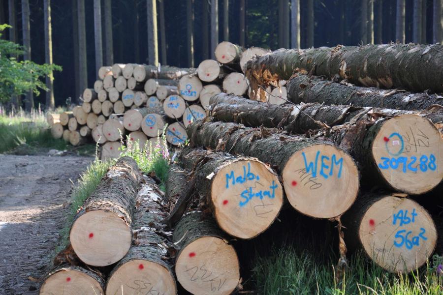 Ministerin Höfken übergibt Förderbescheid an Holzvermarktungsorganisation