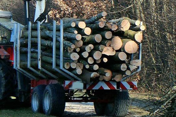 19-Jähriger baut Unfall und verliert Holzstämme