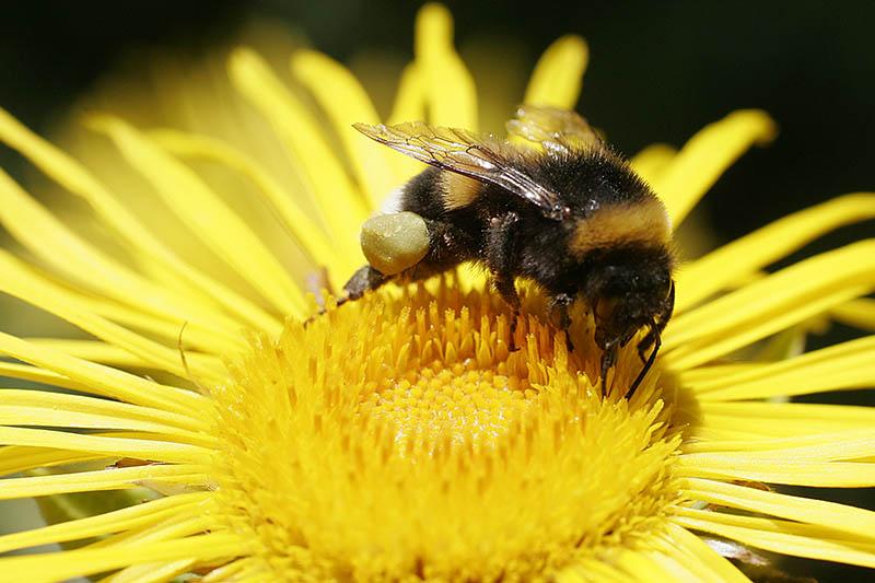 Insekten-Atlas: Globales Insektensterben mit nachhaltiger Agrarpolitik verhindern