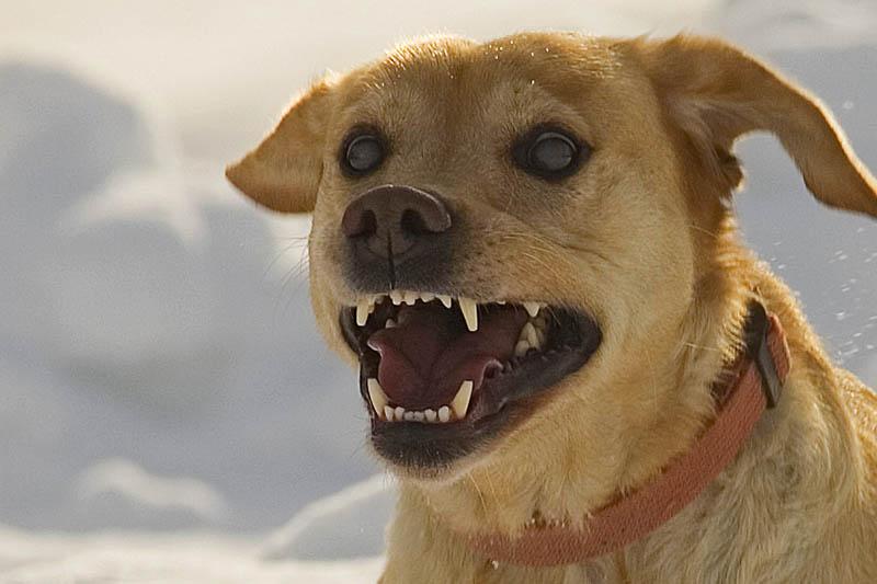 Frau wird durch Hundebisse schwer verletzt