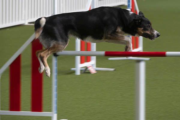 Besonderheit in Höhr-Grenzhausen: Hundesporthalle Westerwald