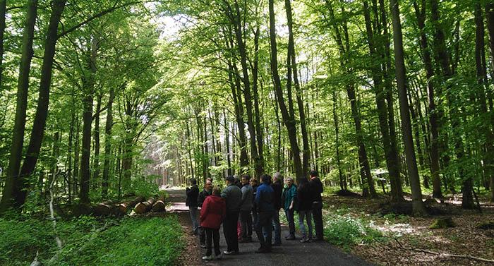 Wählergruppe Otto lud zur Waldbegehung ein