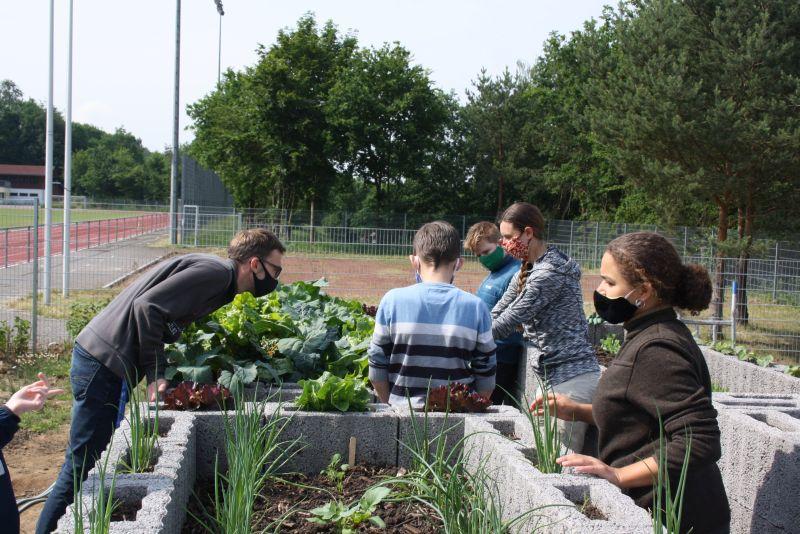 """Ackern mit Abstand: """"GemüseAckerdemie"""" an der IGS Selters"""