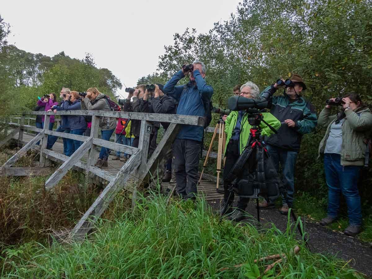 Vogelzug am Dreifelder Weiher live erlebt