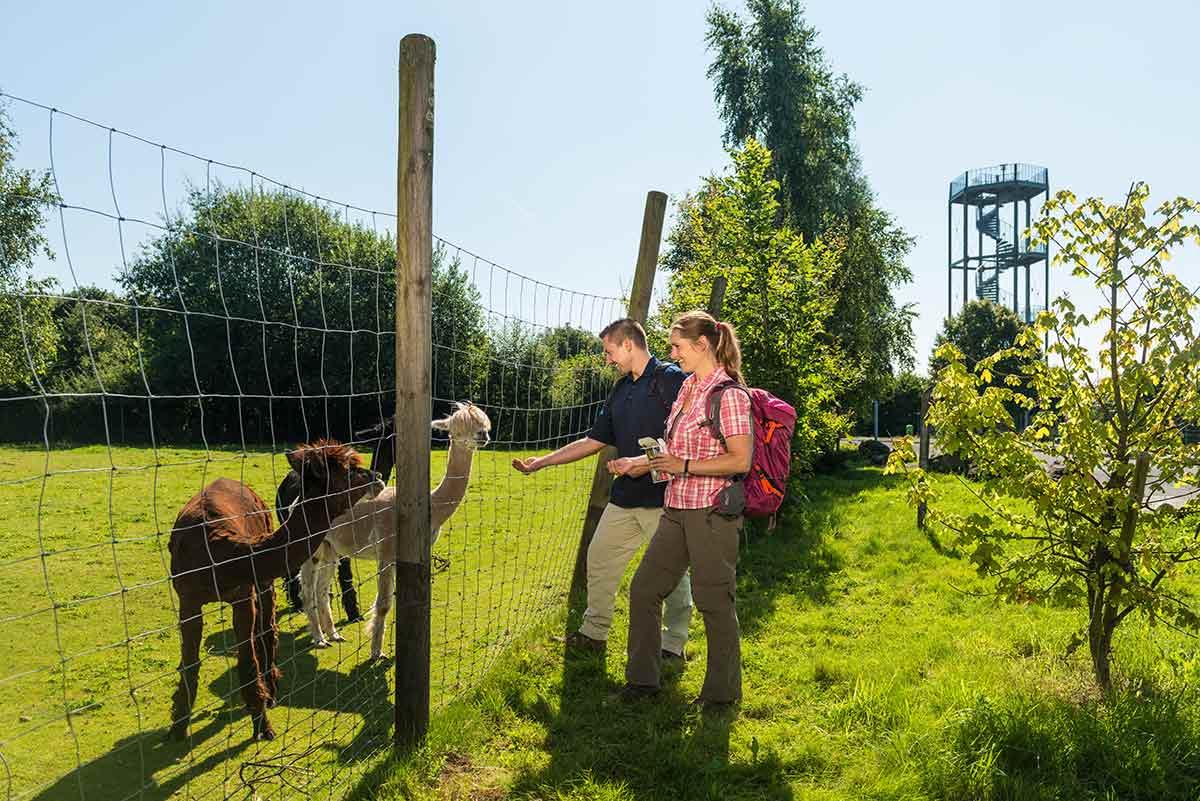 Wildpark Bad Marienberg: Tiere, Abenteuerspielplatz und mehr für die ganze Familie