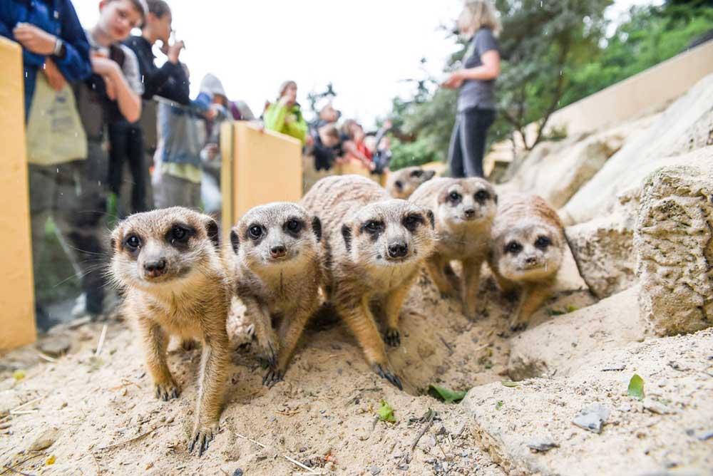 Zoos und Tierparks im Westerwald: Unsere Tipps aus der Region