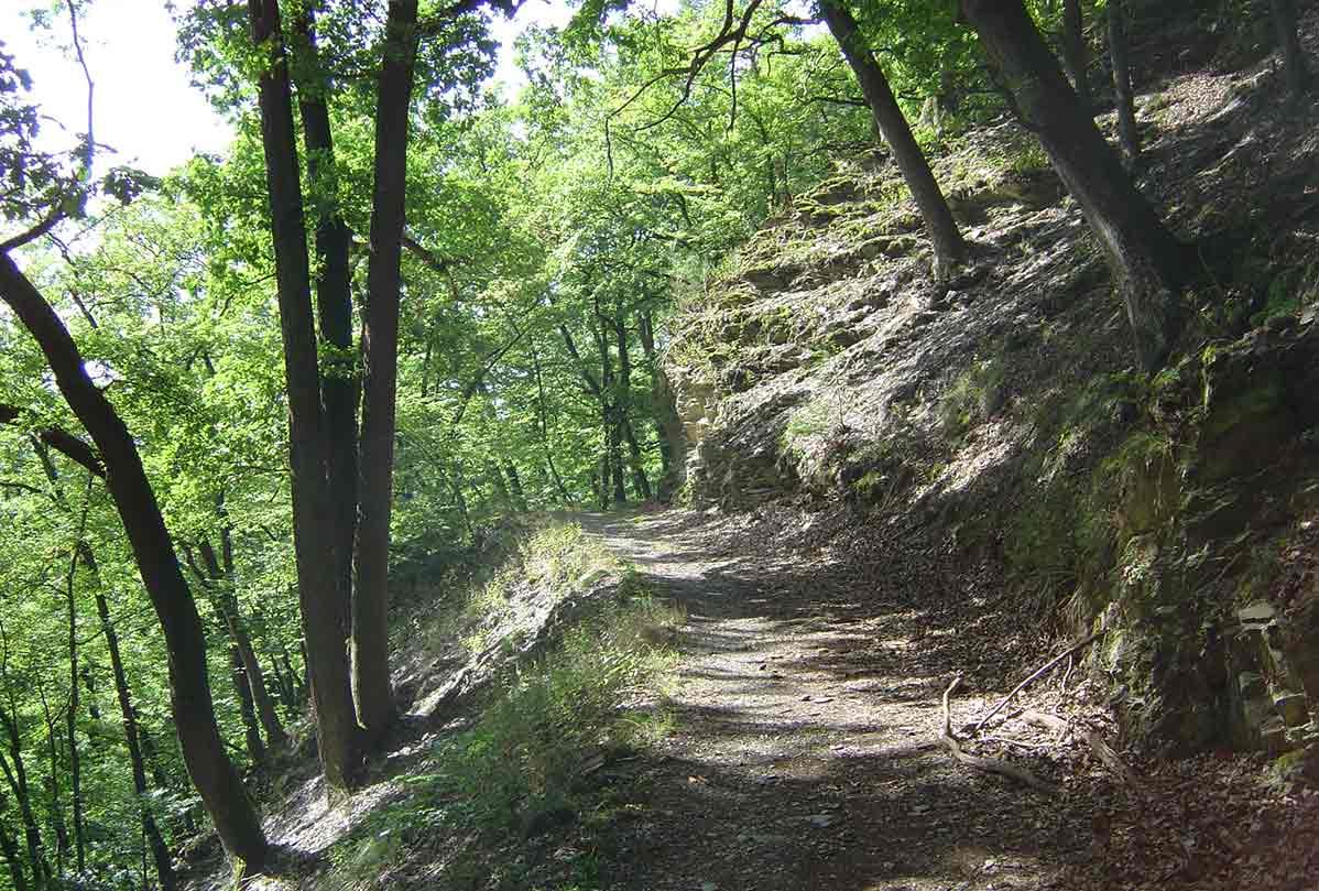 Wäller Tour Brexbachschluchtweg in Grenzau: Rundwanderung im Kannenbäckerland