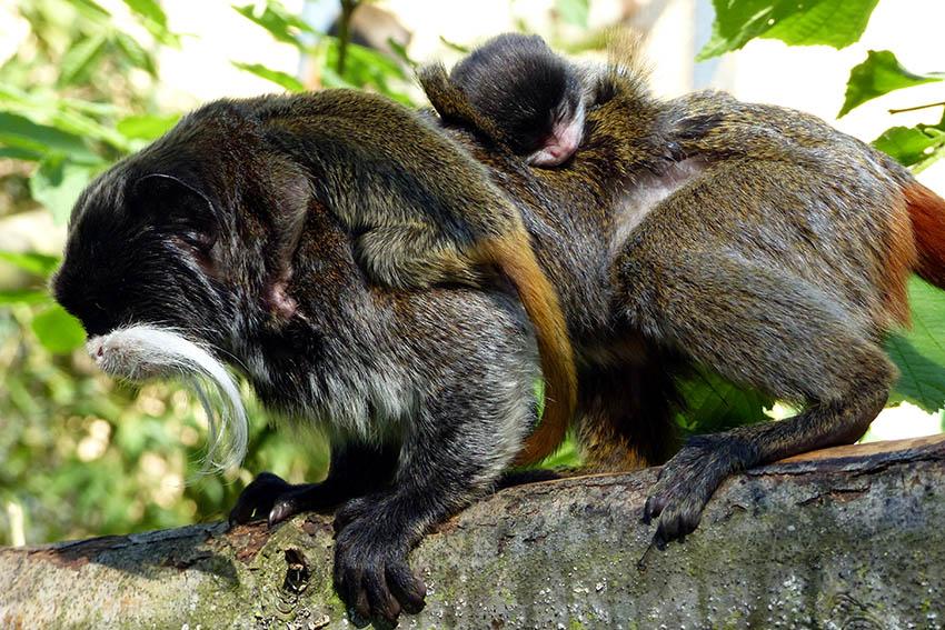 Fotos: Zoo Neuwied