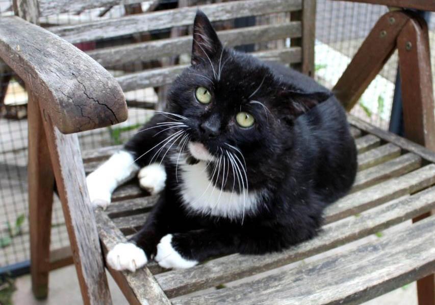 """Der Feli-Fonds - ein Hilfsfonds für die """"vergessenen"""" Katzen"""