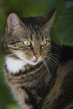 Hinweise zu verschwundenen Katzen erbeten